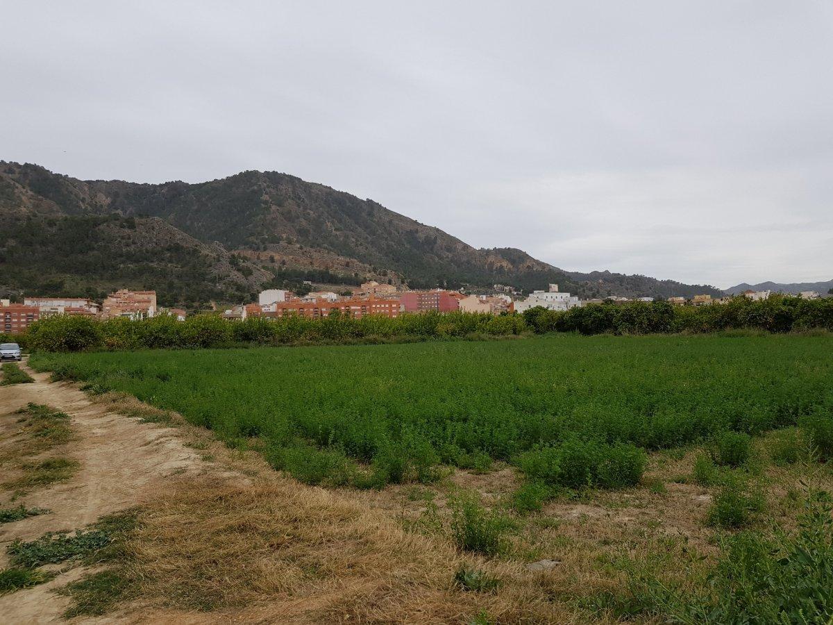 Terrenos rurales - 01154