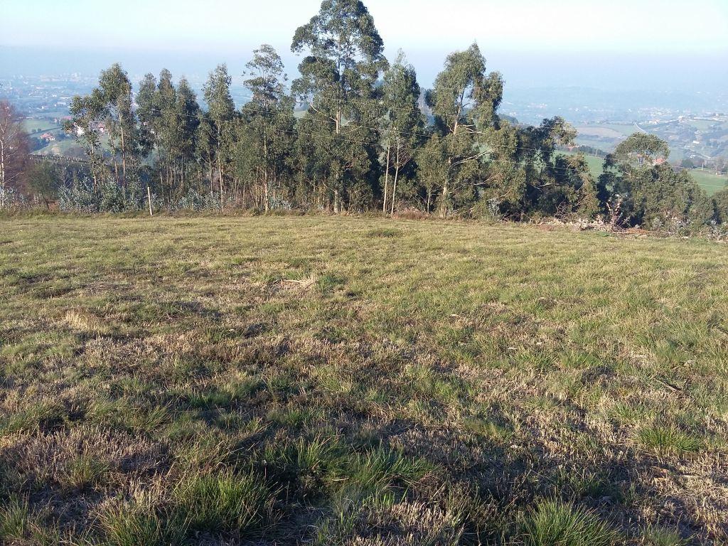 Arroyo-la pedrera - imagenInmueble3