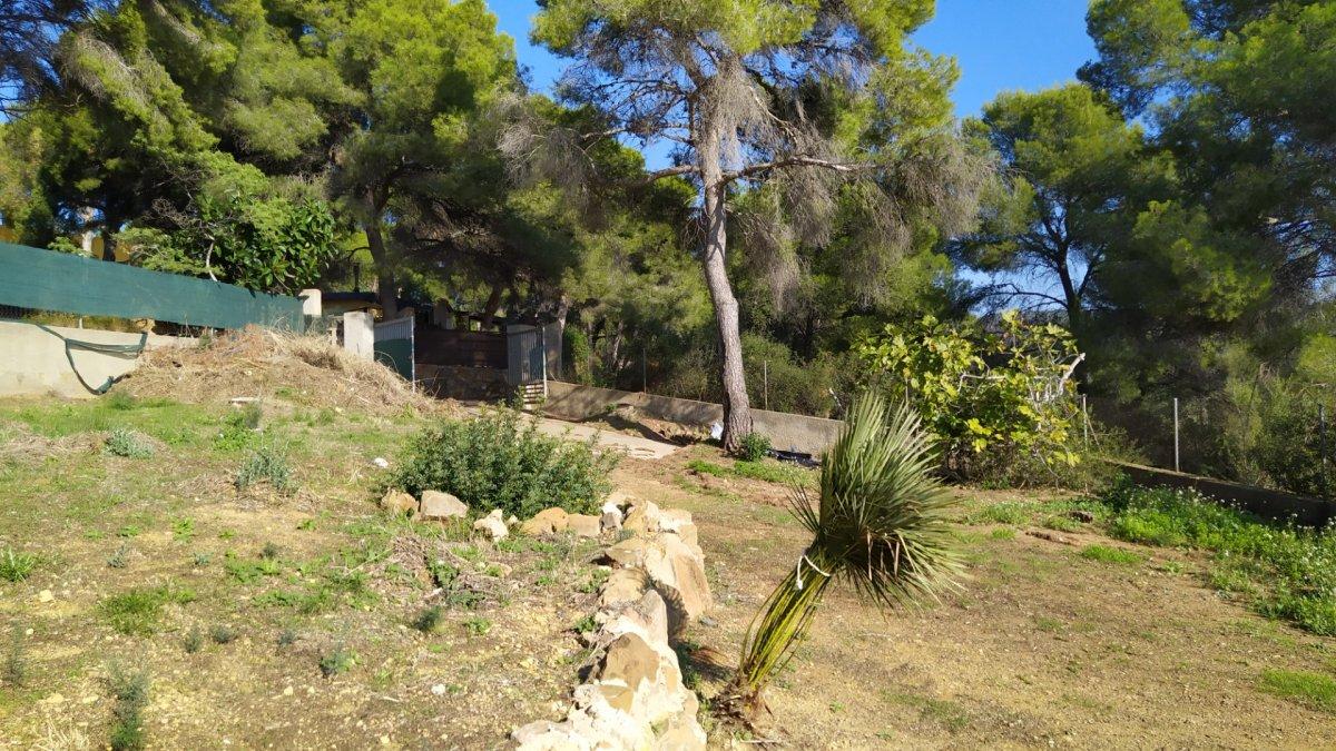 terreny-rustic en albalat-dels-tarongers · pla-de-pavia 25000€