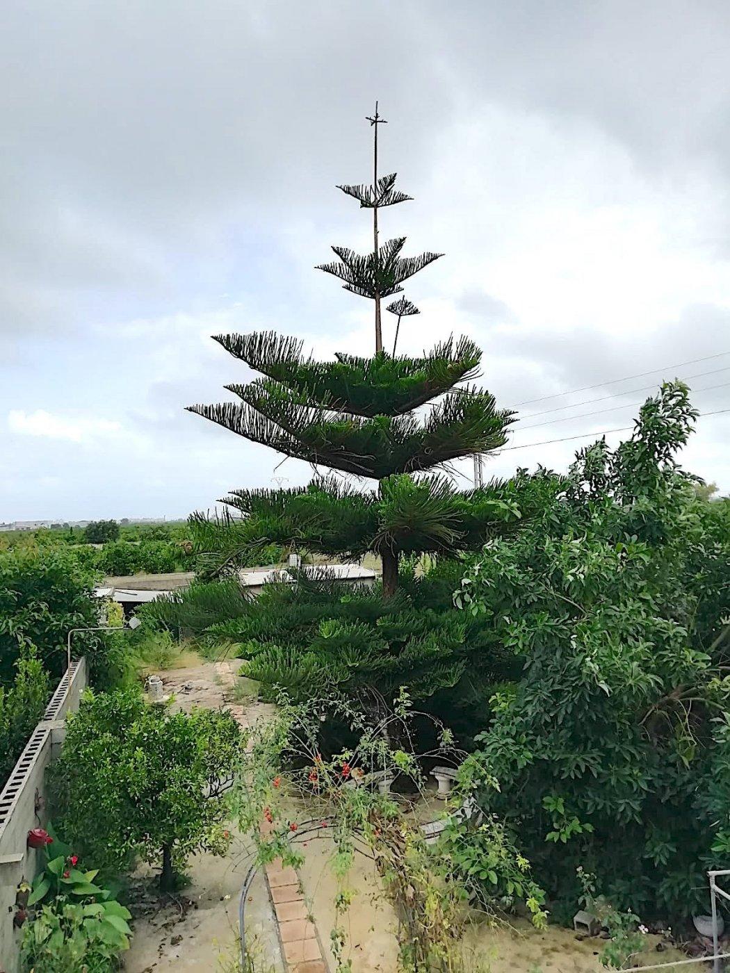 Magnífico adosado en palmera con terraza al mejor precio. - imagenInmueble23