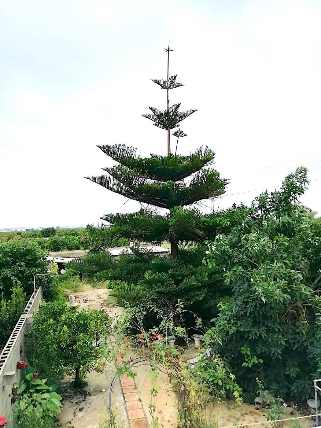 Magnífico adosado en palmera con terraza al mejor precio. - imagenInmueble24