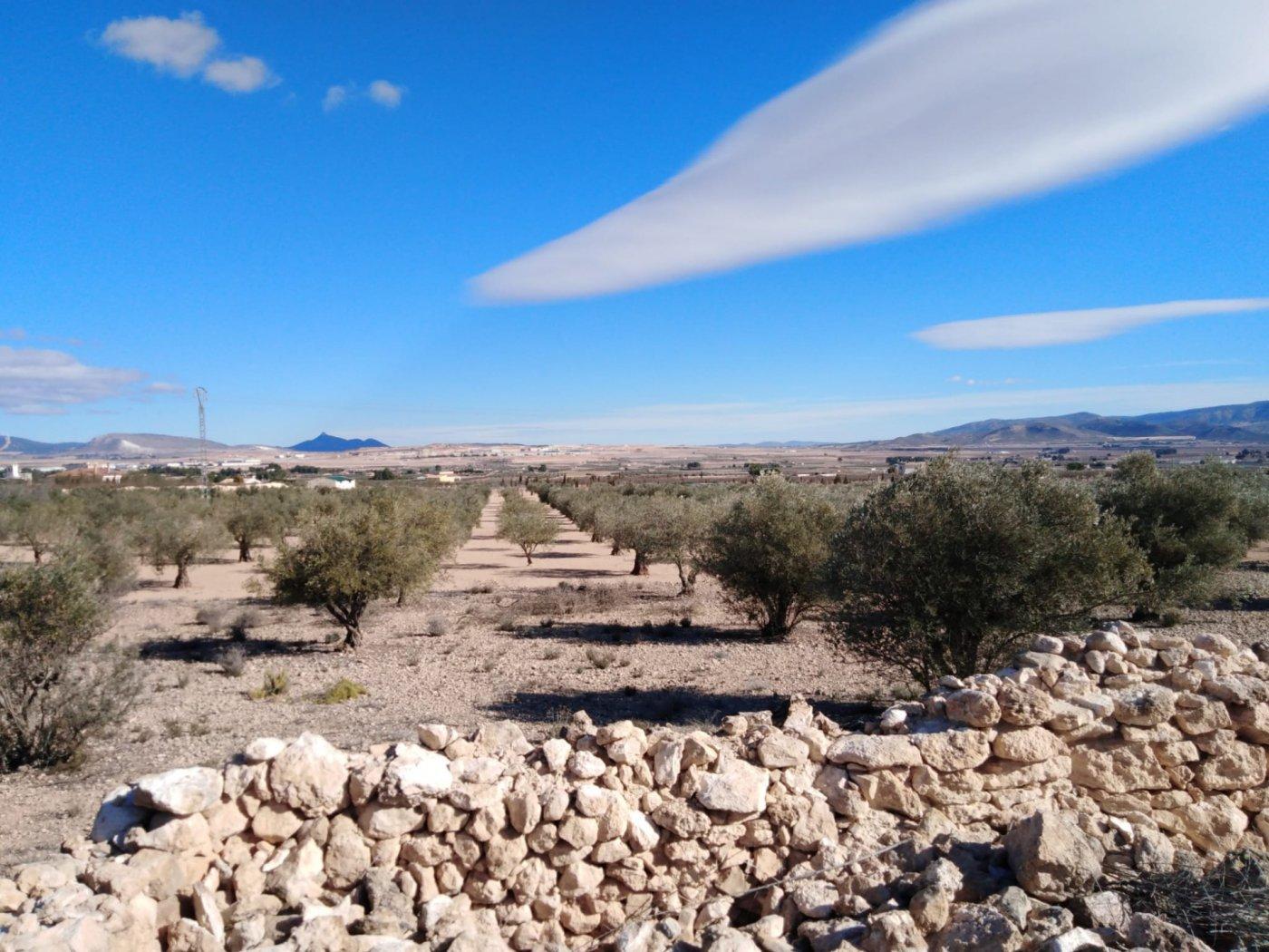 terrain en caudete · campo 25000€