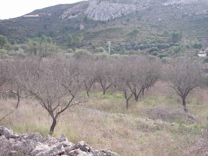 Terrain · Alcalali · Paraje La Fuente 78.000€