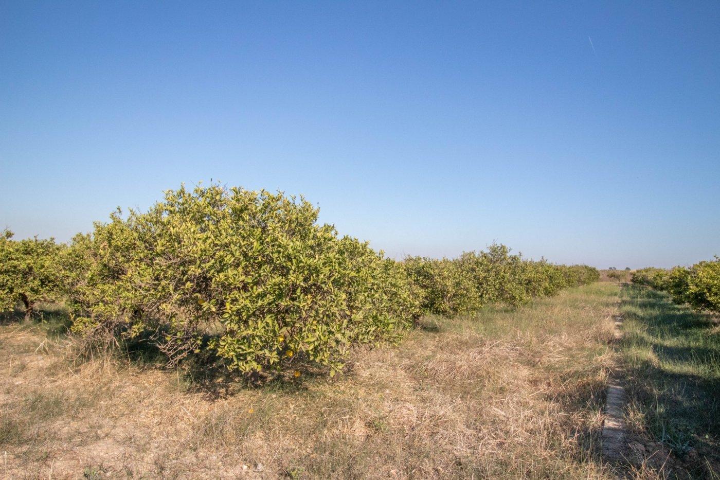 Terreno Rural · Llauri · Llaurí 35.000€€