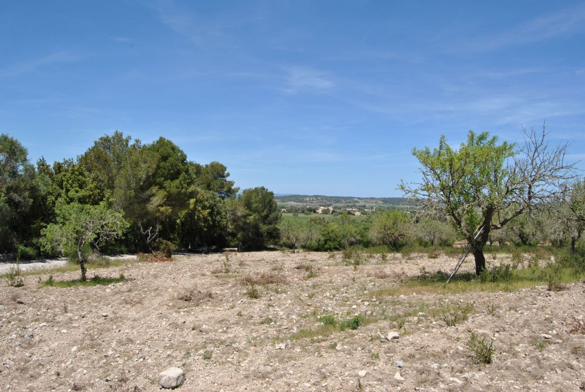 Terreno urbanizable-Venta-Algaida-185876-Foto-5-Carrousel