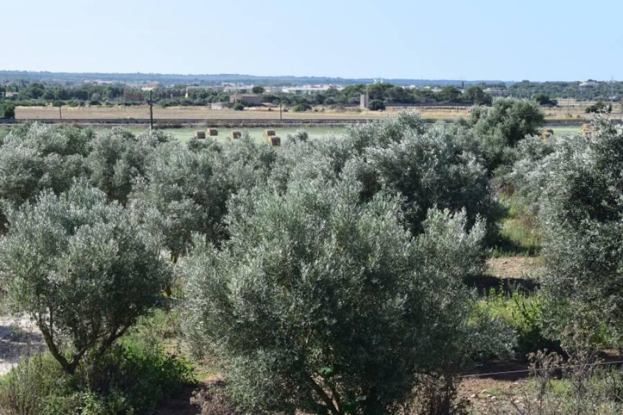 Casa de campo-Venta-Palma de Mallorca-185855-Foto-1