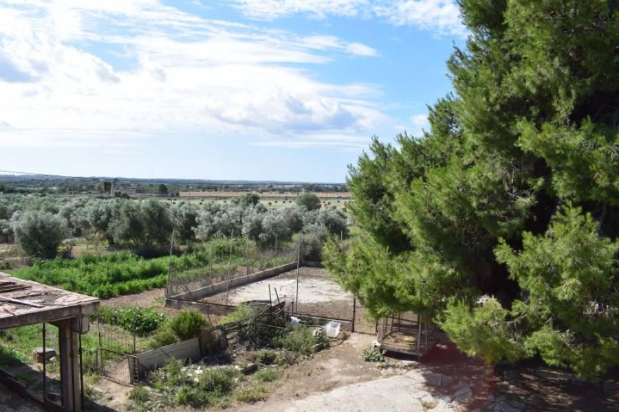 Casa de campo-Venta-Palma de Mallorca-185855-Foto-11