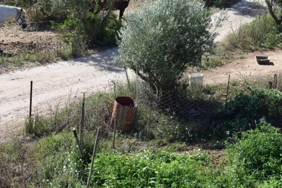 Casa de campo-Venta-Palma de Mallorca-185855-Foto-16