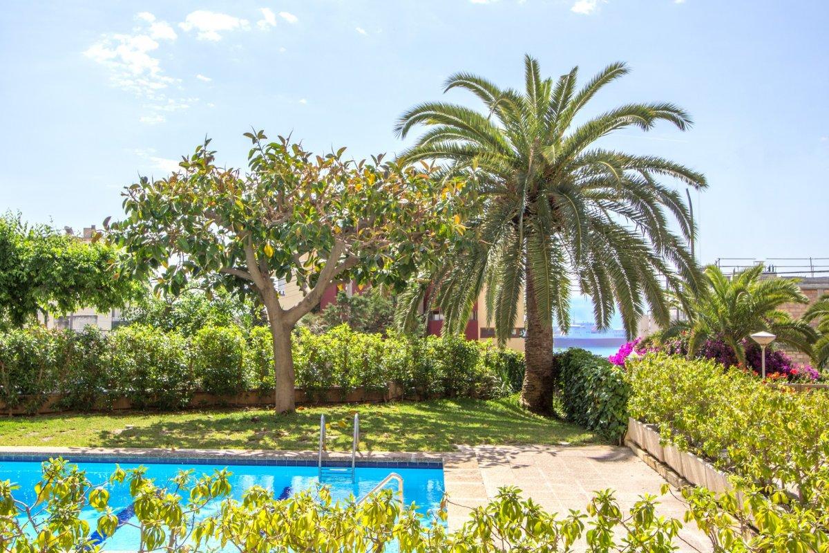 Planta baja-Venta-Palma de Mallorca-210488-Foto-1