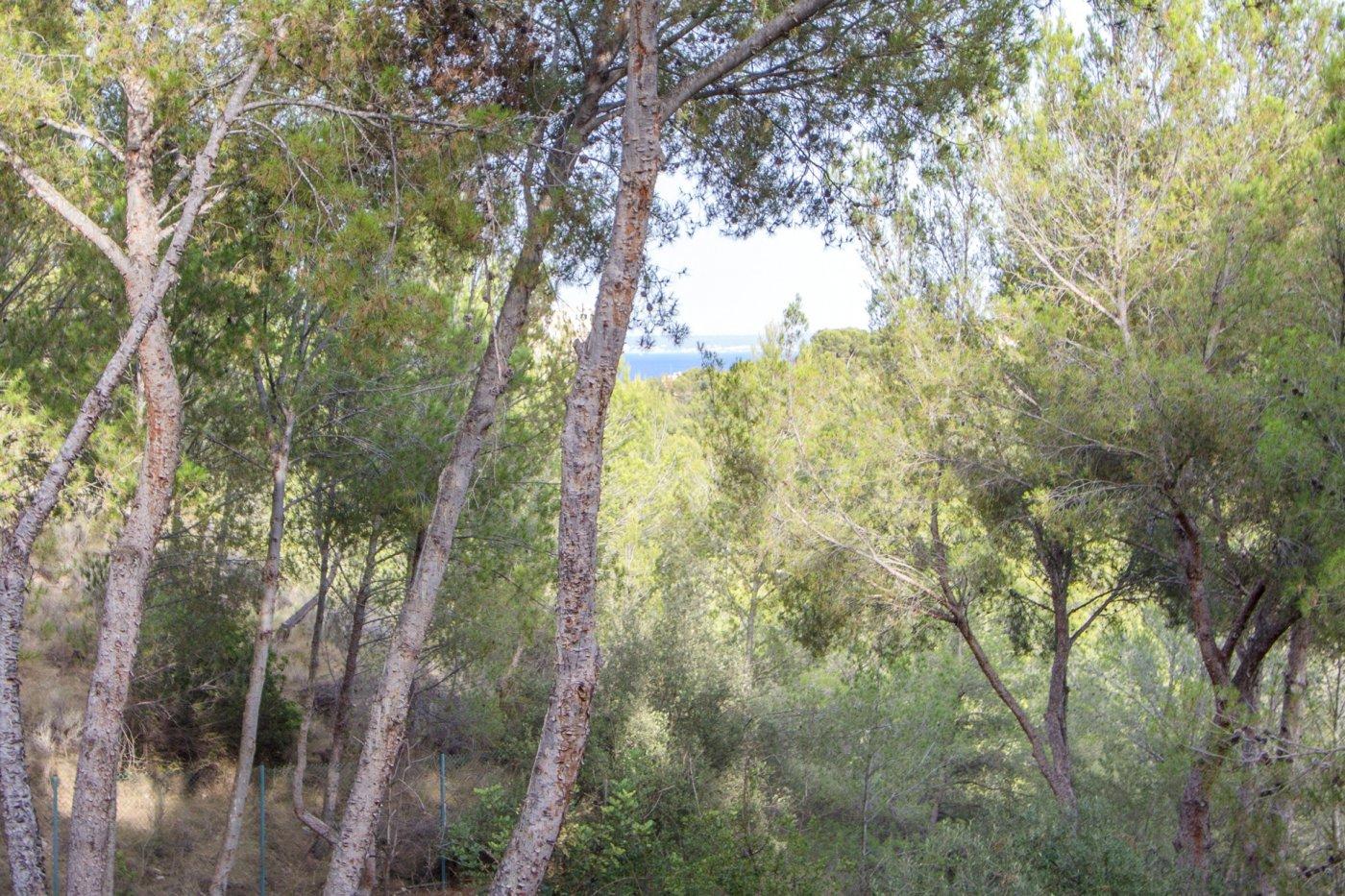 Planta baja-Venta-Calvià-211068-Foto-5