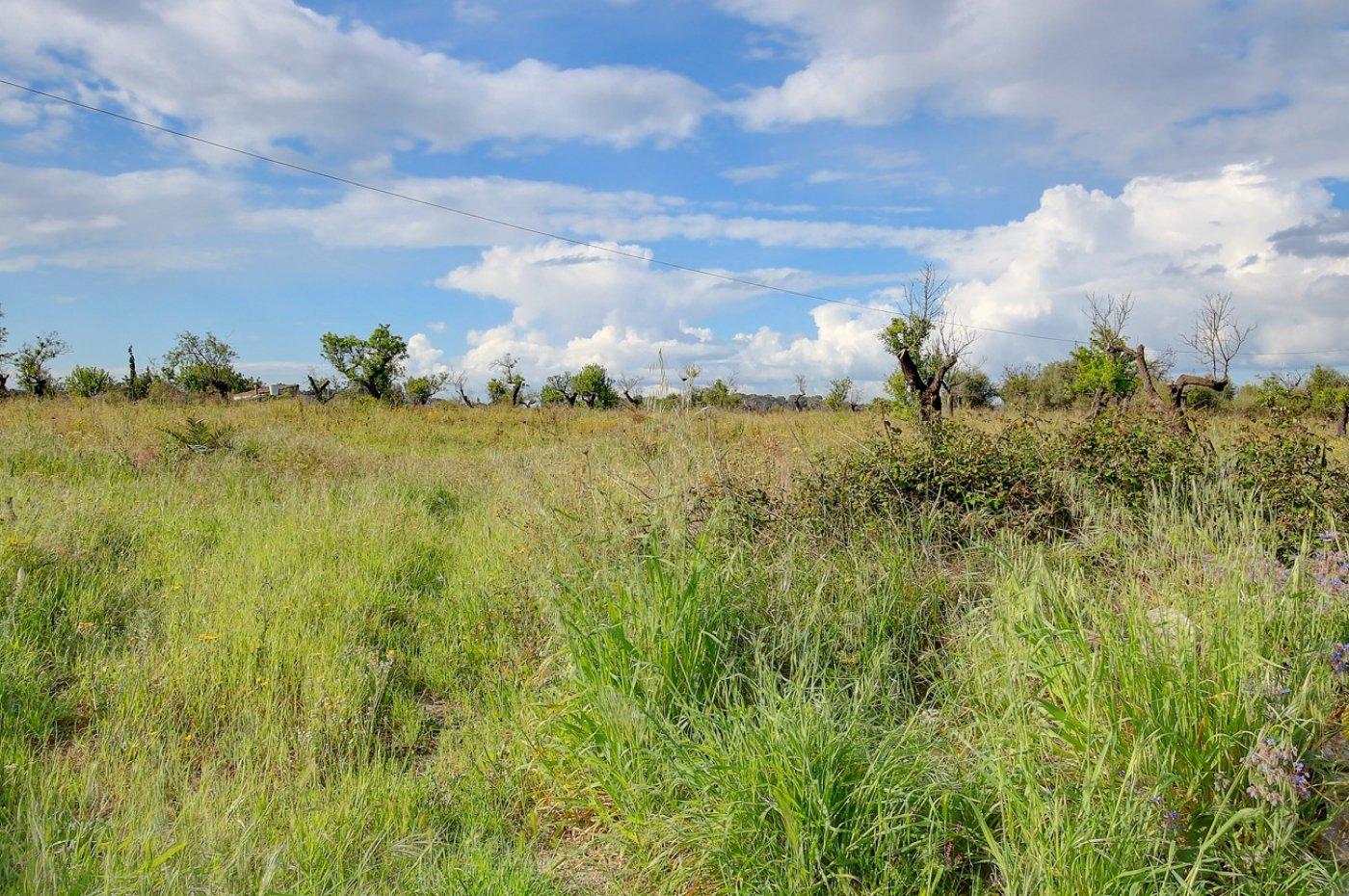 Terrenos rurales - 01919