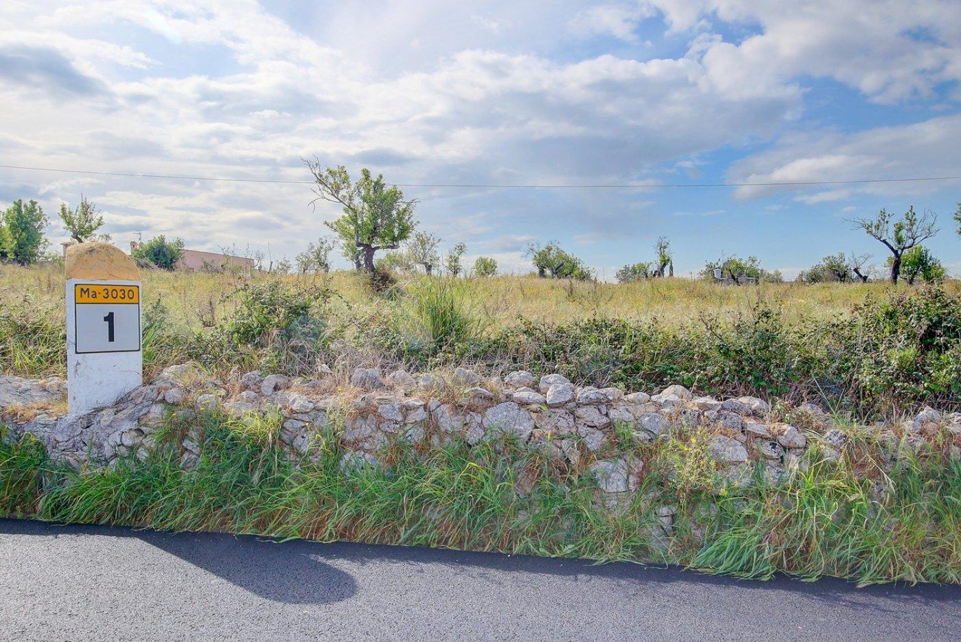 Terreno de cultivo en marratxinet - imagenInmueble1