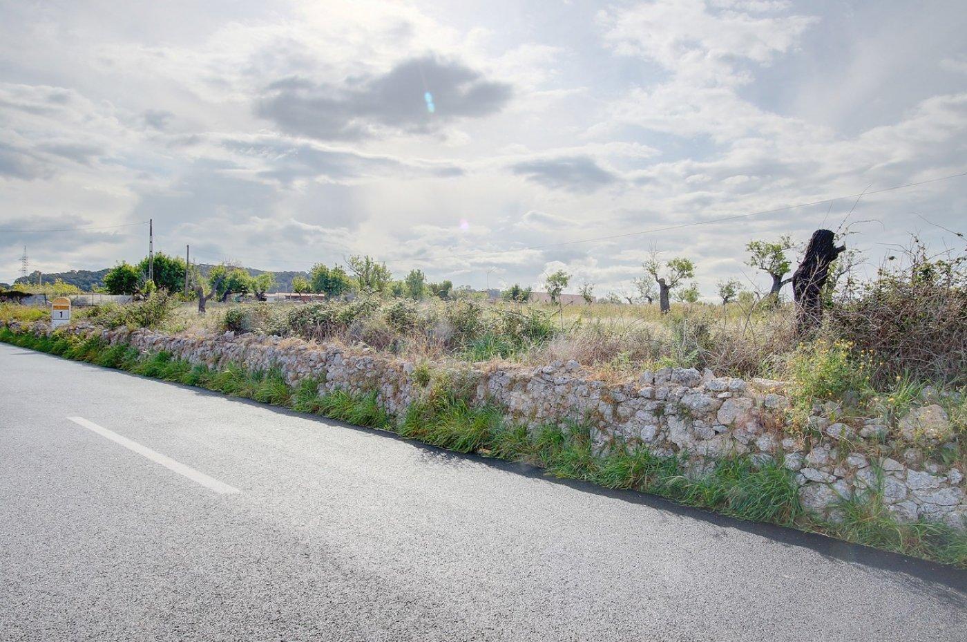 Terreno de cultivo en marratxinet - imagenInmueble3