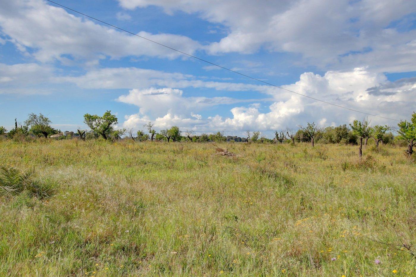 Terreno de cultivo en marratxinet - imagenInmueble4