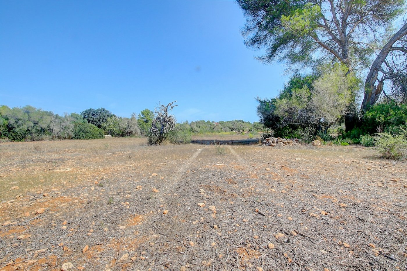 terreno-urbanizable en algaida · algaida-campo 120000€