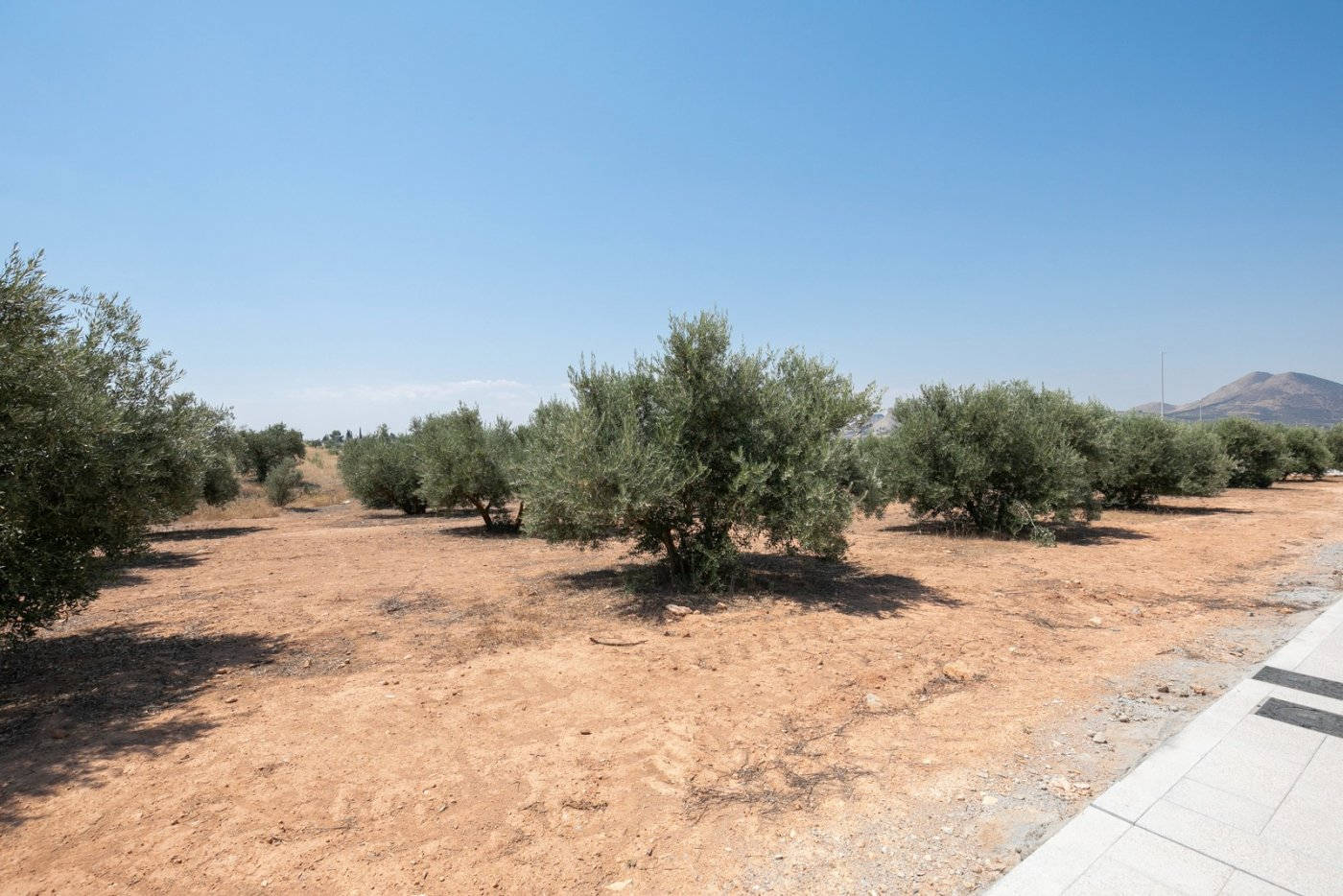 Solar · Albolote · CHAPARRAL 45.000€€
