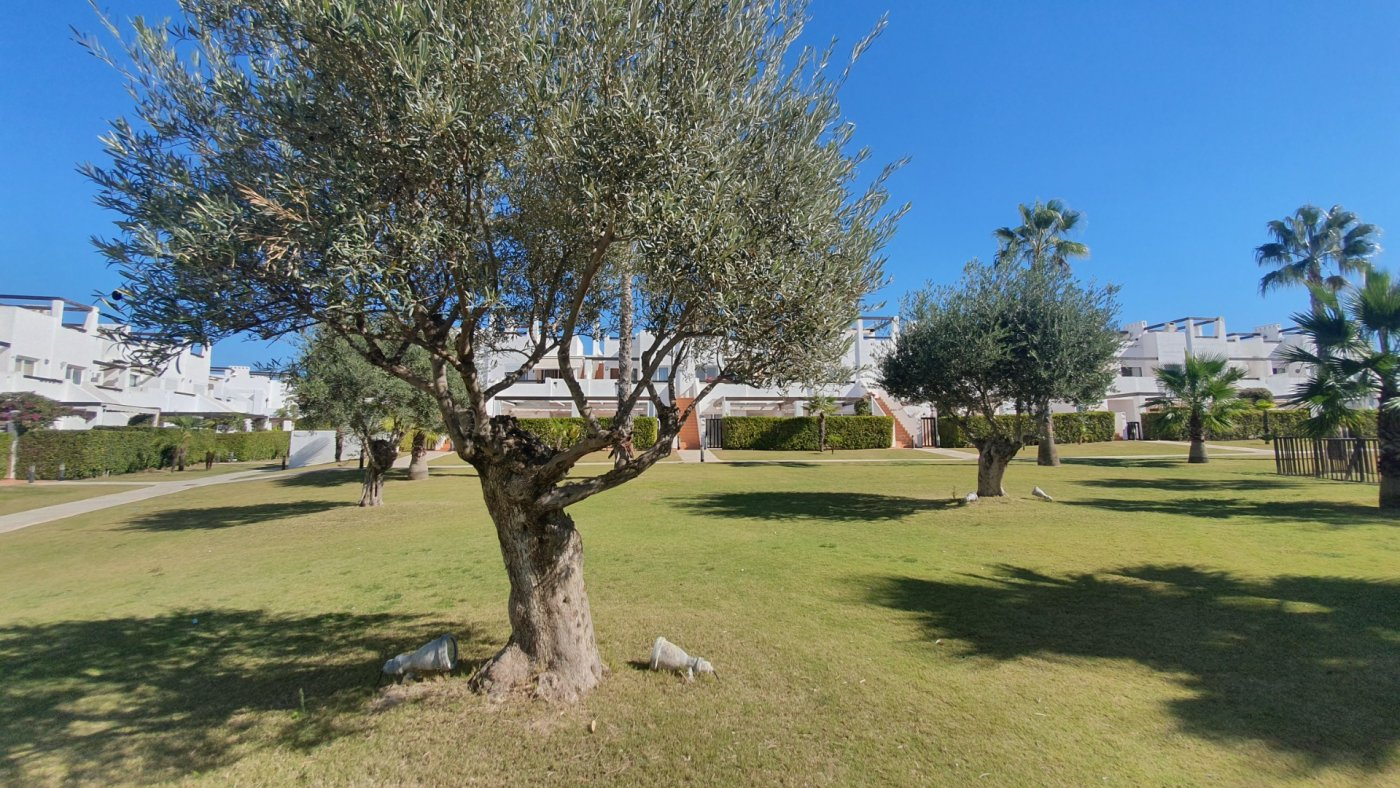 Gallery Image 29 of South facing 3 bedroom ground floor apartment on a corner plot in Jardin 2