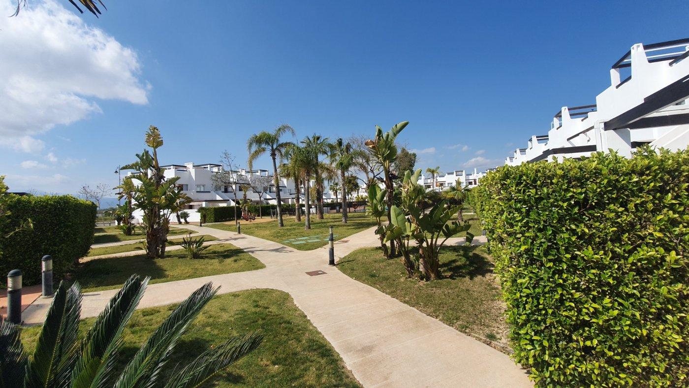Gallery Image 27 of Espectacular atico de 2 dormitorios con terraza y gran solarium y piscina comunitaria en Naranjos 6