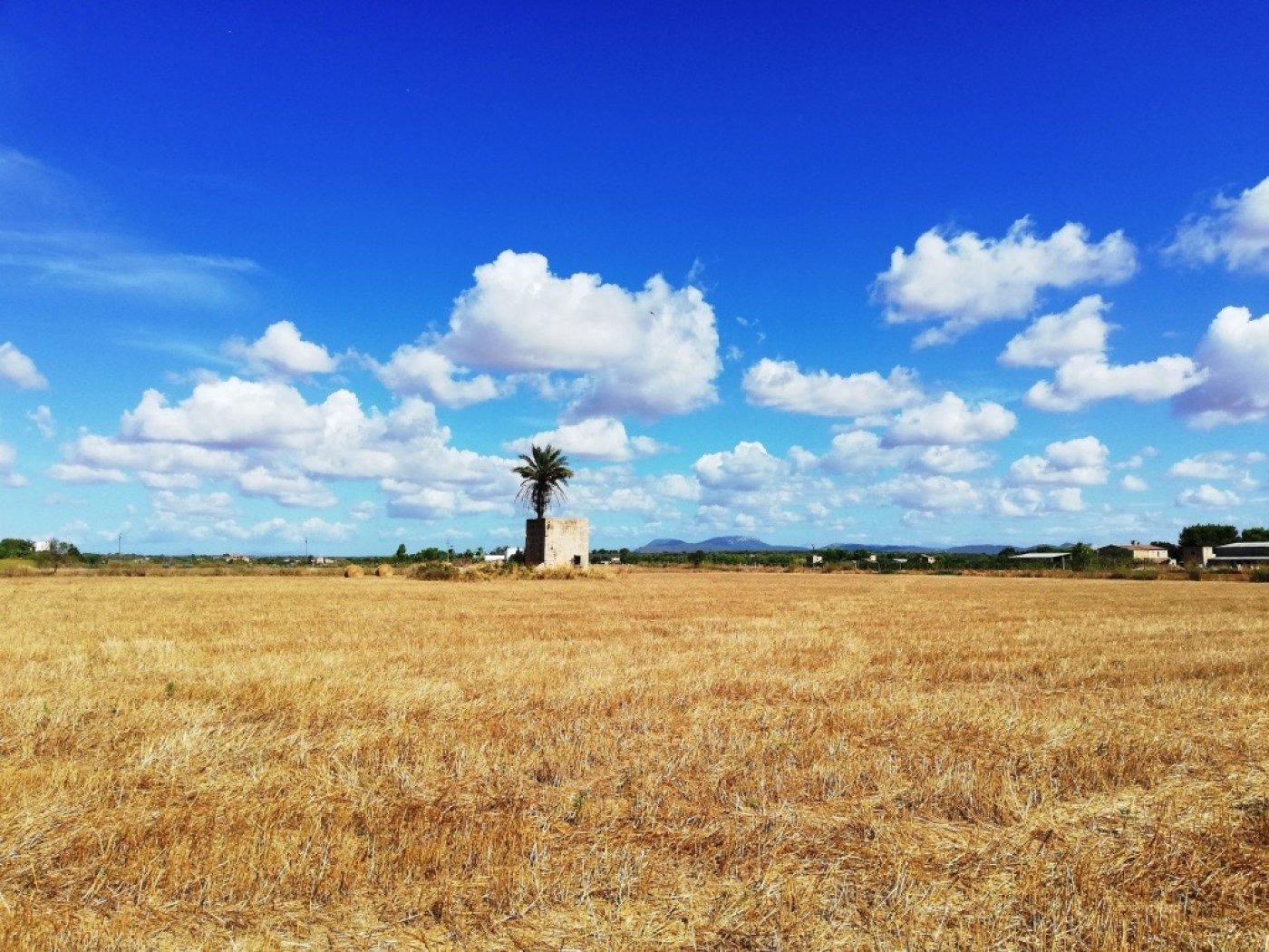 Rural Land · Campos · Campos 185.000€€