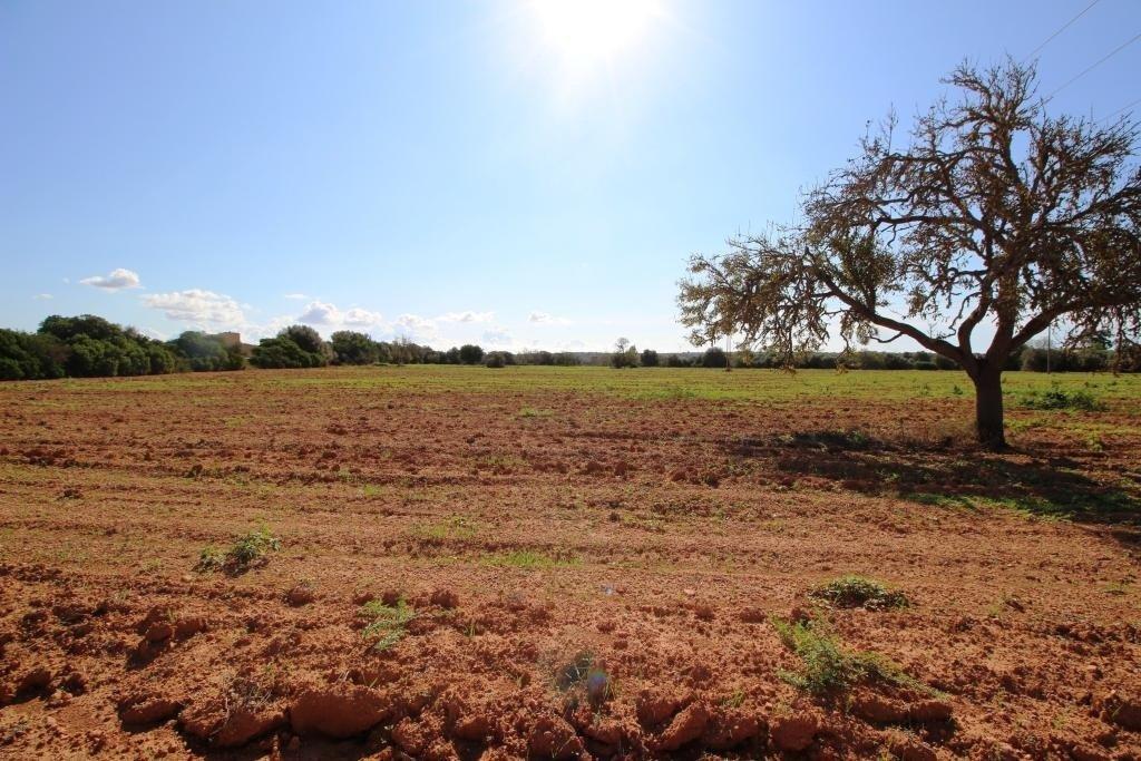 terreno-rural en campos · area-de-campos 150000€