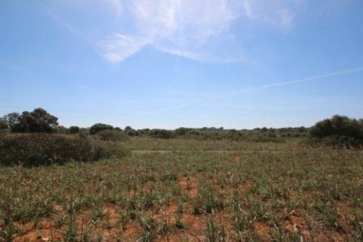 rural-land en santanyi · santanyi 335000€