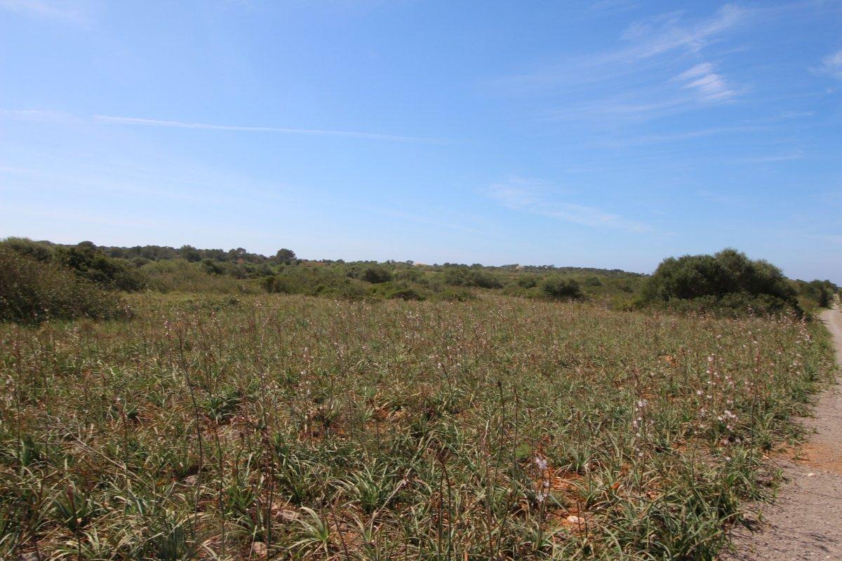 rural-land en santanyi · santanyi 295000€