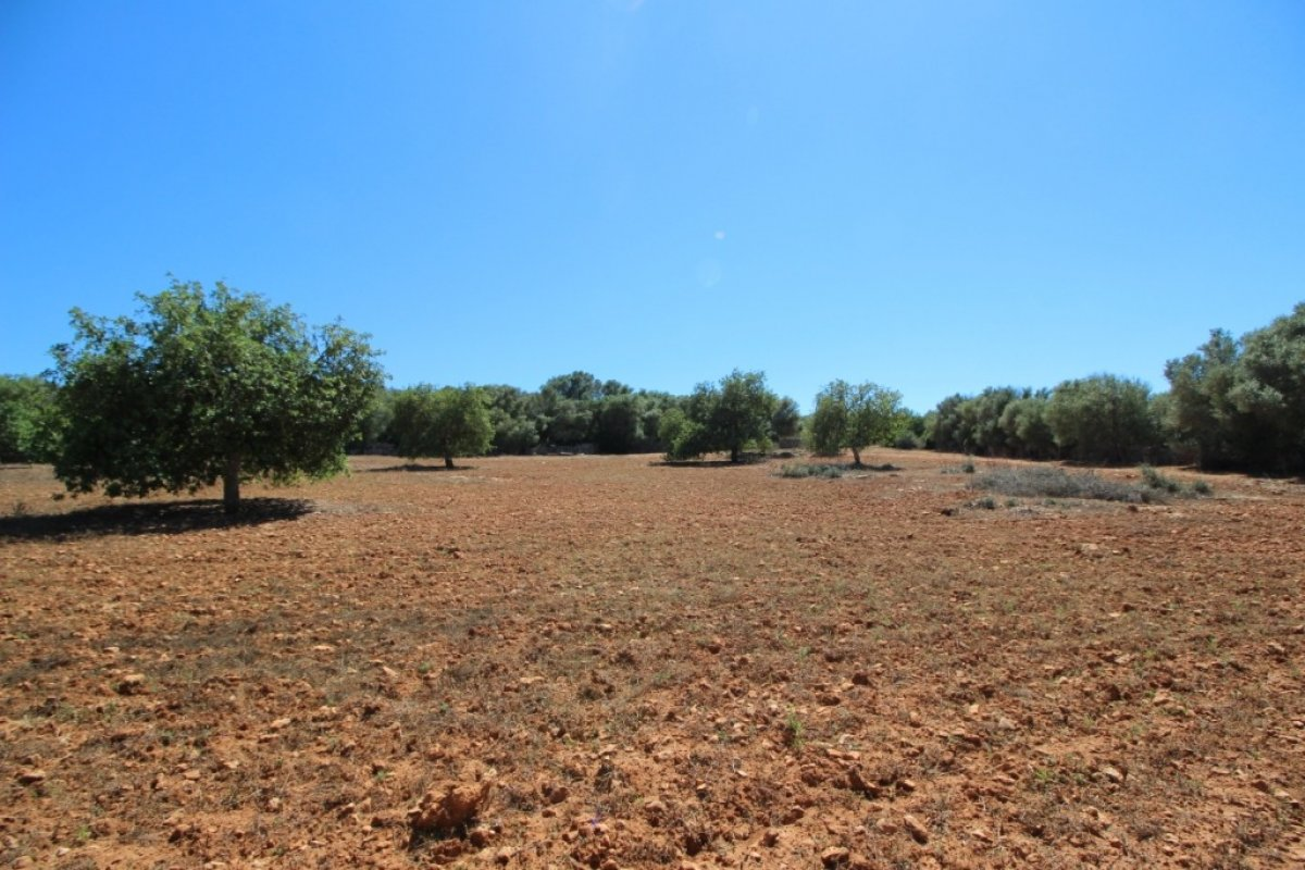 Rural Land · Campos · Campos 425.000€€