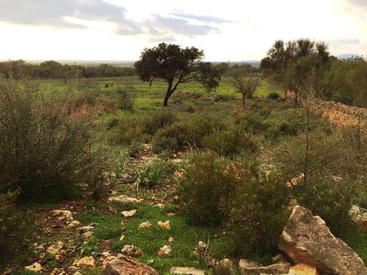 rural-land en campos · campos 255000€