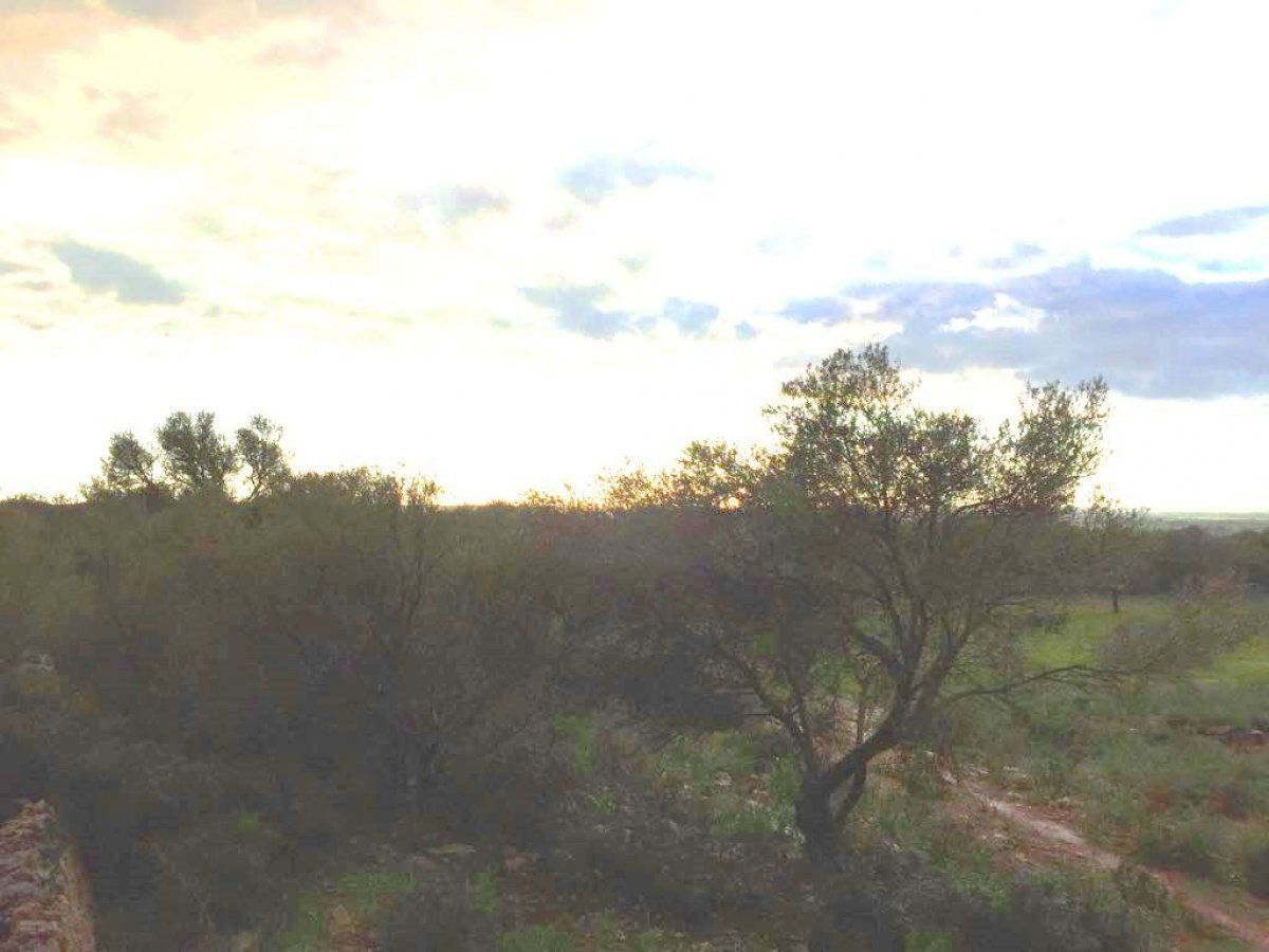 Rural Land · Campos · Campos 255.000€€