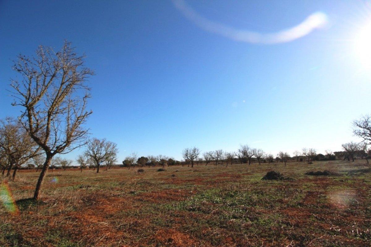 Rural Land · Campos · Campos 150.000€€
