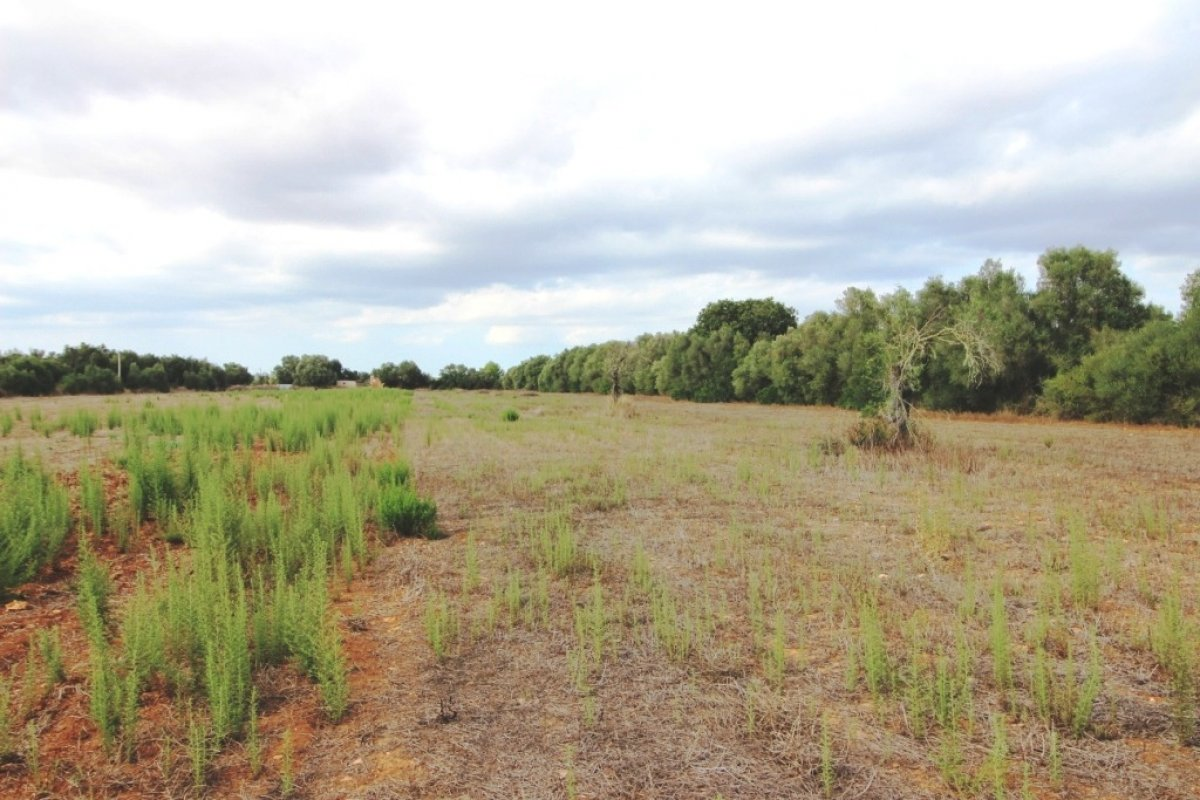 terreno-rural en felanitx · son-mesquida 160000€