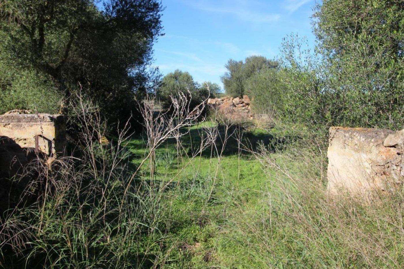 terreno-rural en campos · sa-rapita 220000€