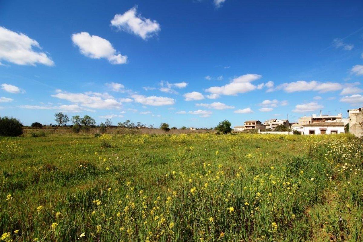 landlich-parzelle en campos · campos 312000€