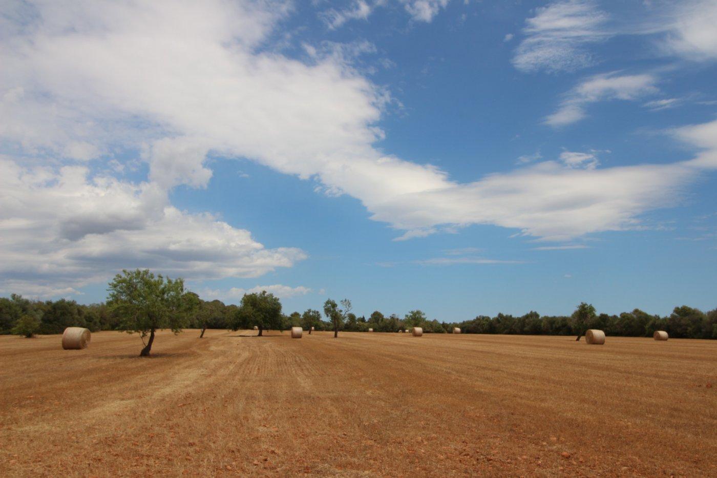 landlich-parzelle en campos · area-de-campos 353000€