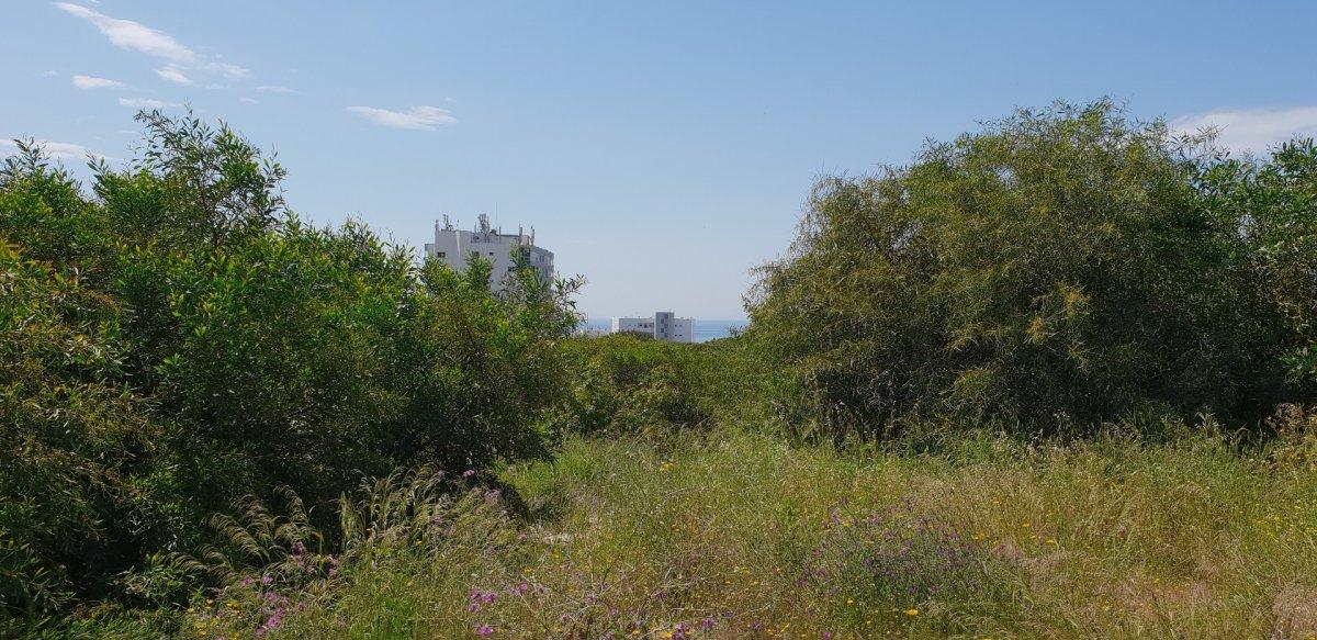 Suelo urbano consolidado para construir  6 villas en calahonda - imagenInmueble3