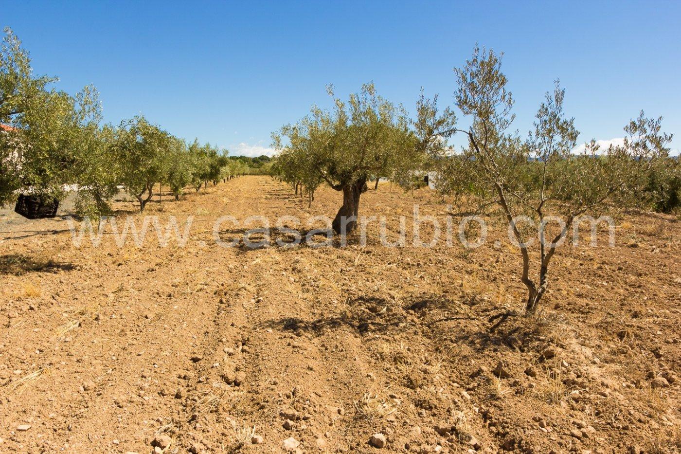 Chalet con vistas a la montaÑa para entrar a vivir en onil - imagenInmueble24