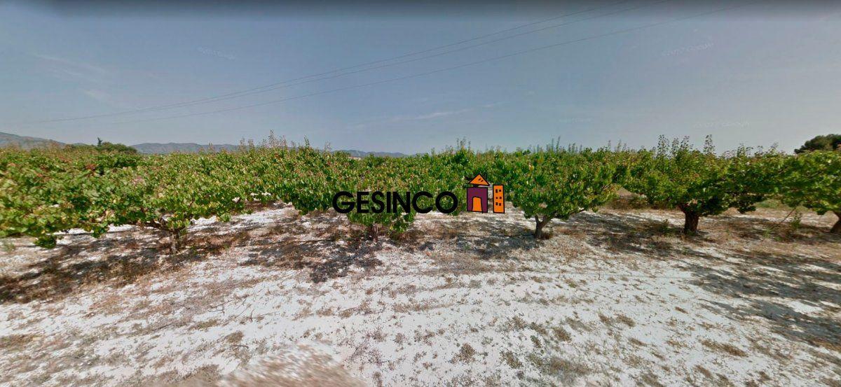 terreno-rural en albaida · albaida 0€