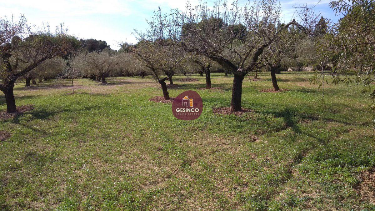 terreno-rural en ontinyent · santa-ana 90000€