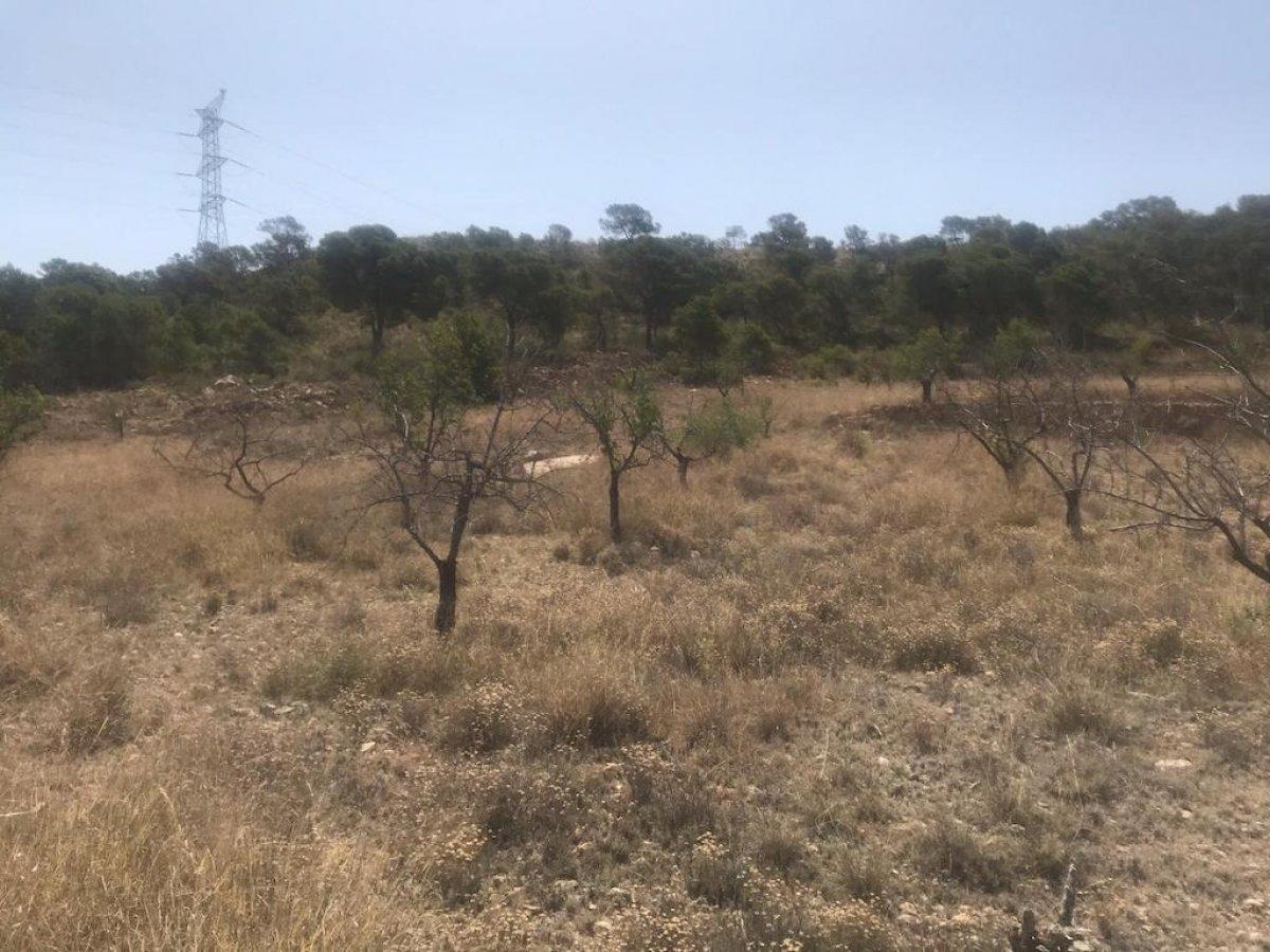 terreno-rural en abanilla · abanilla 13000€