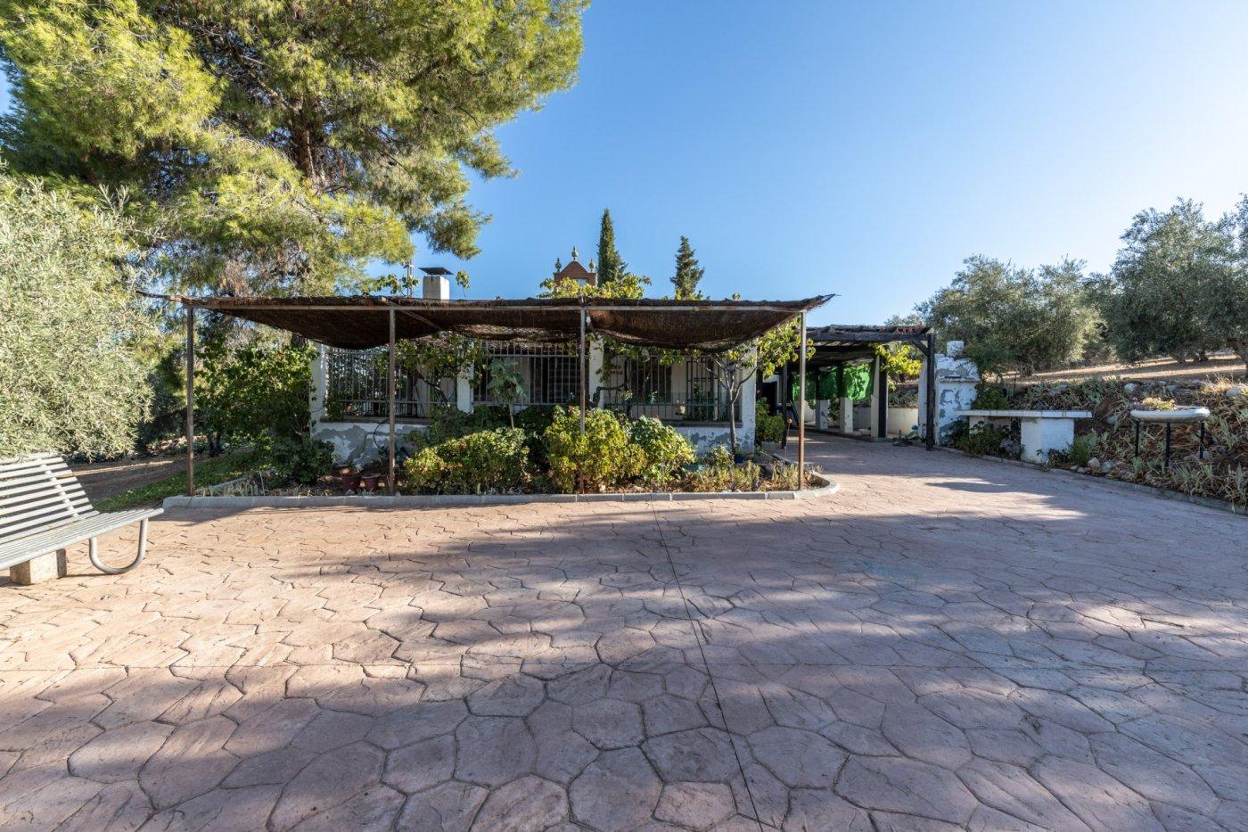 Casa rural con 300 olivos de riego y almendras