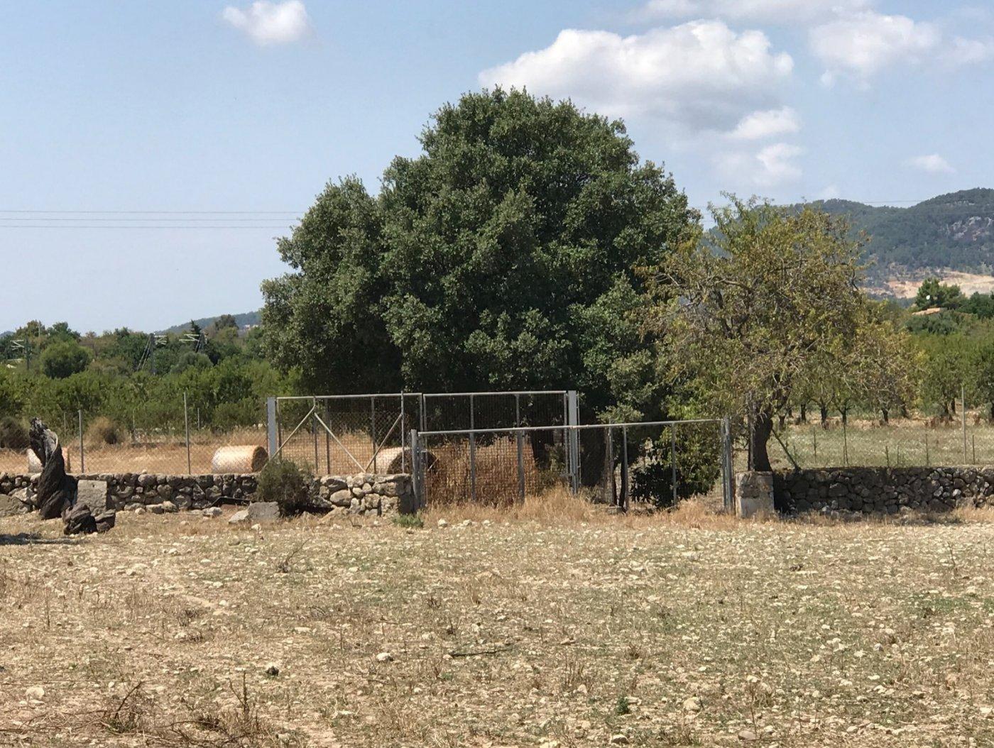 Estupenda propiedad agraria con nave - imagenInmueble17