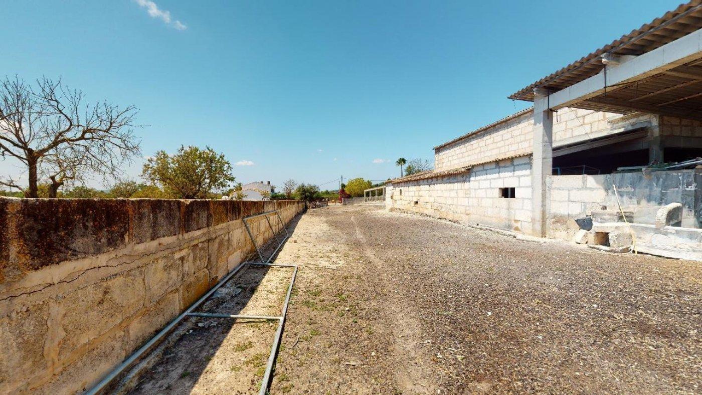 Estupenda propiedad agraria con nave - imagenInmueble5