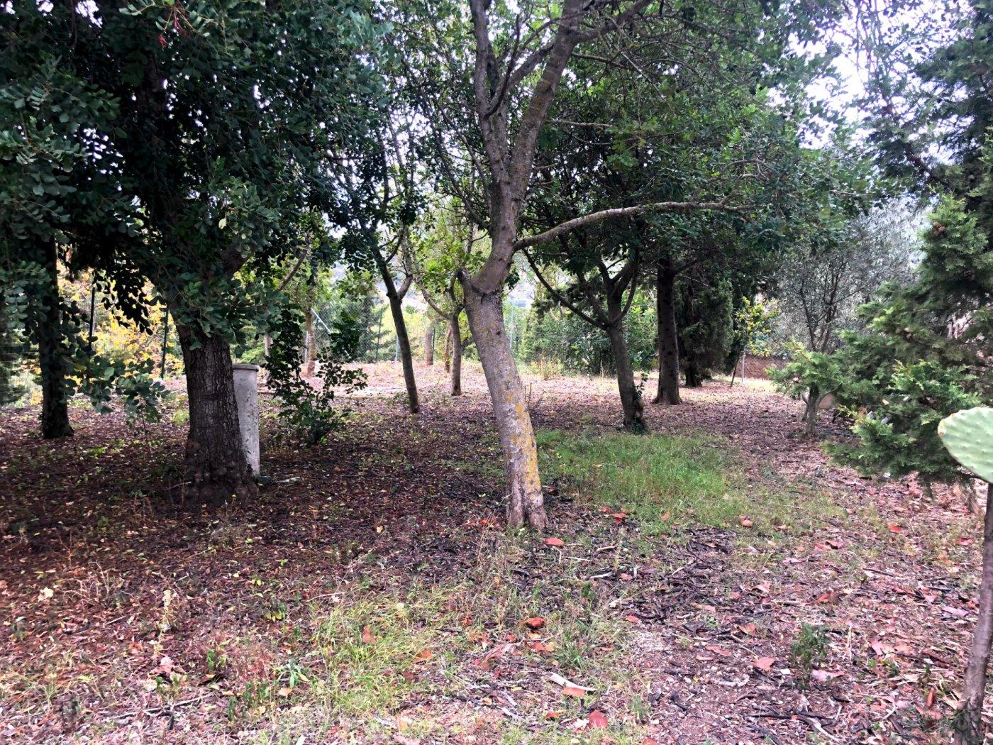 Oportunidad de comprar un fantástico terreno en suelo urbano en esporles - imagenInmueble17