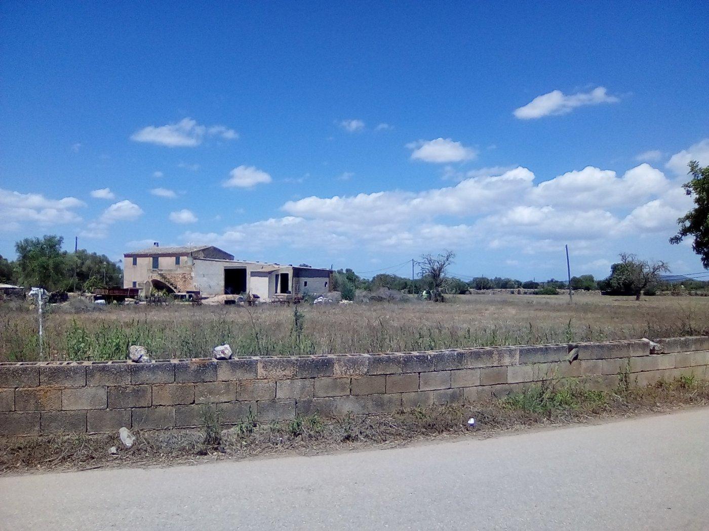Finca rustica en venta con casa de campo en son valls felanitx - imagenInmueble9