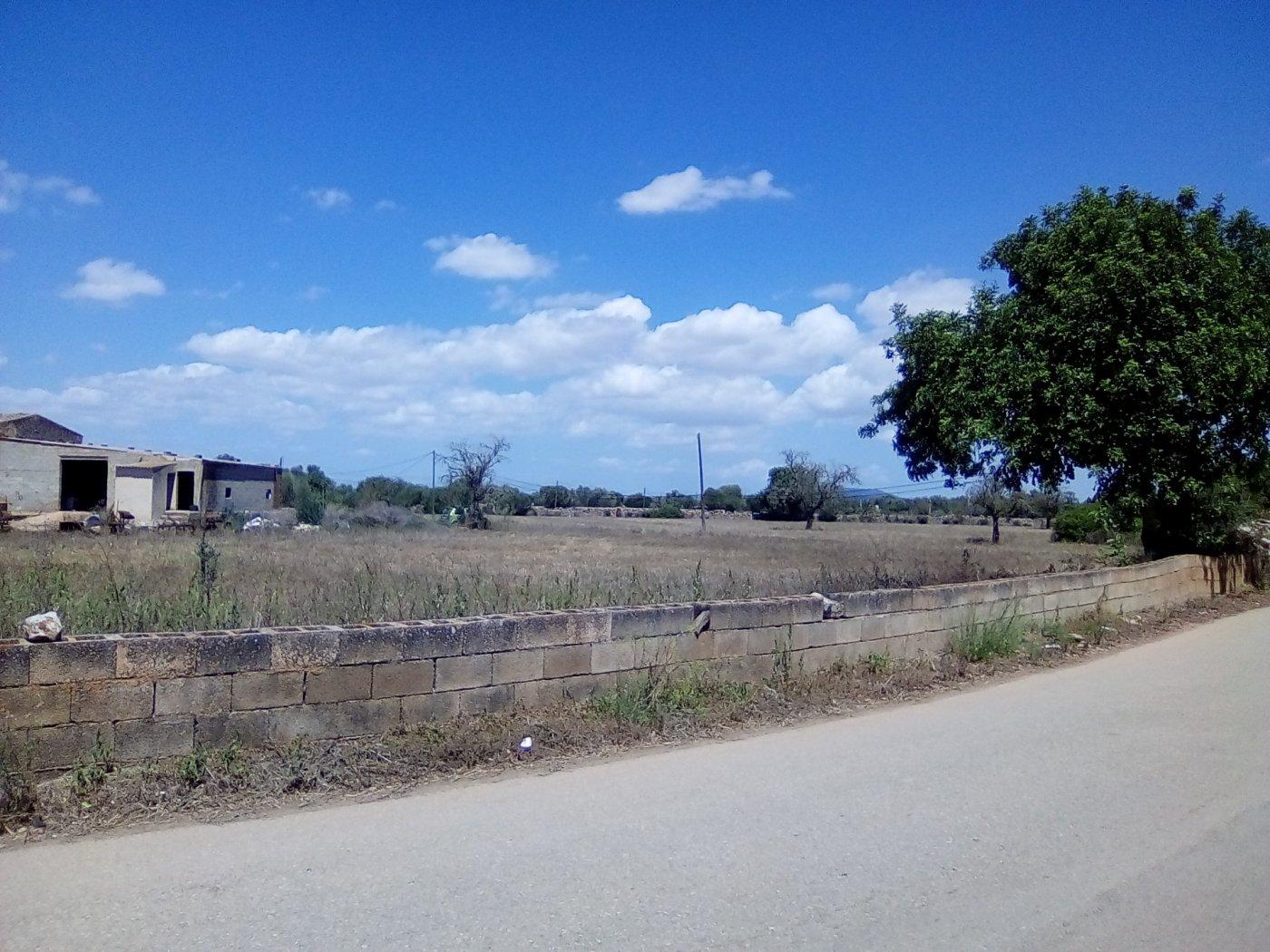 Finca rustica en venta con casa de campo en son valls felanitx - imagenInmueble13