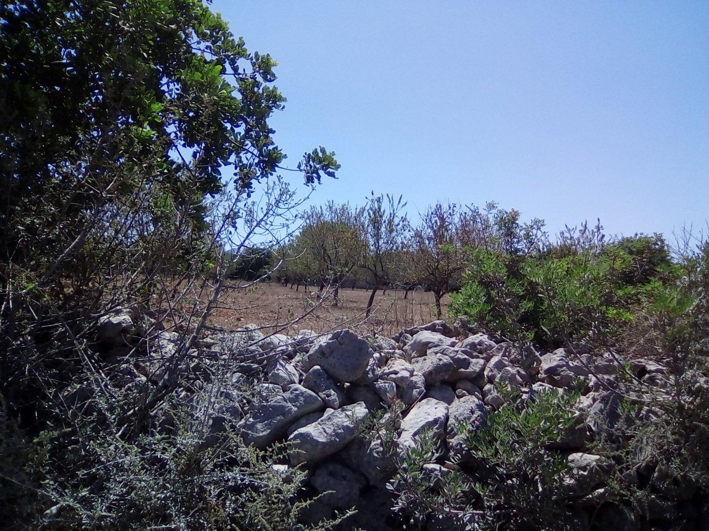 Finca rustica en venta con casa de campo en son valls felanitx - imagenInmueble5