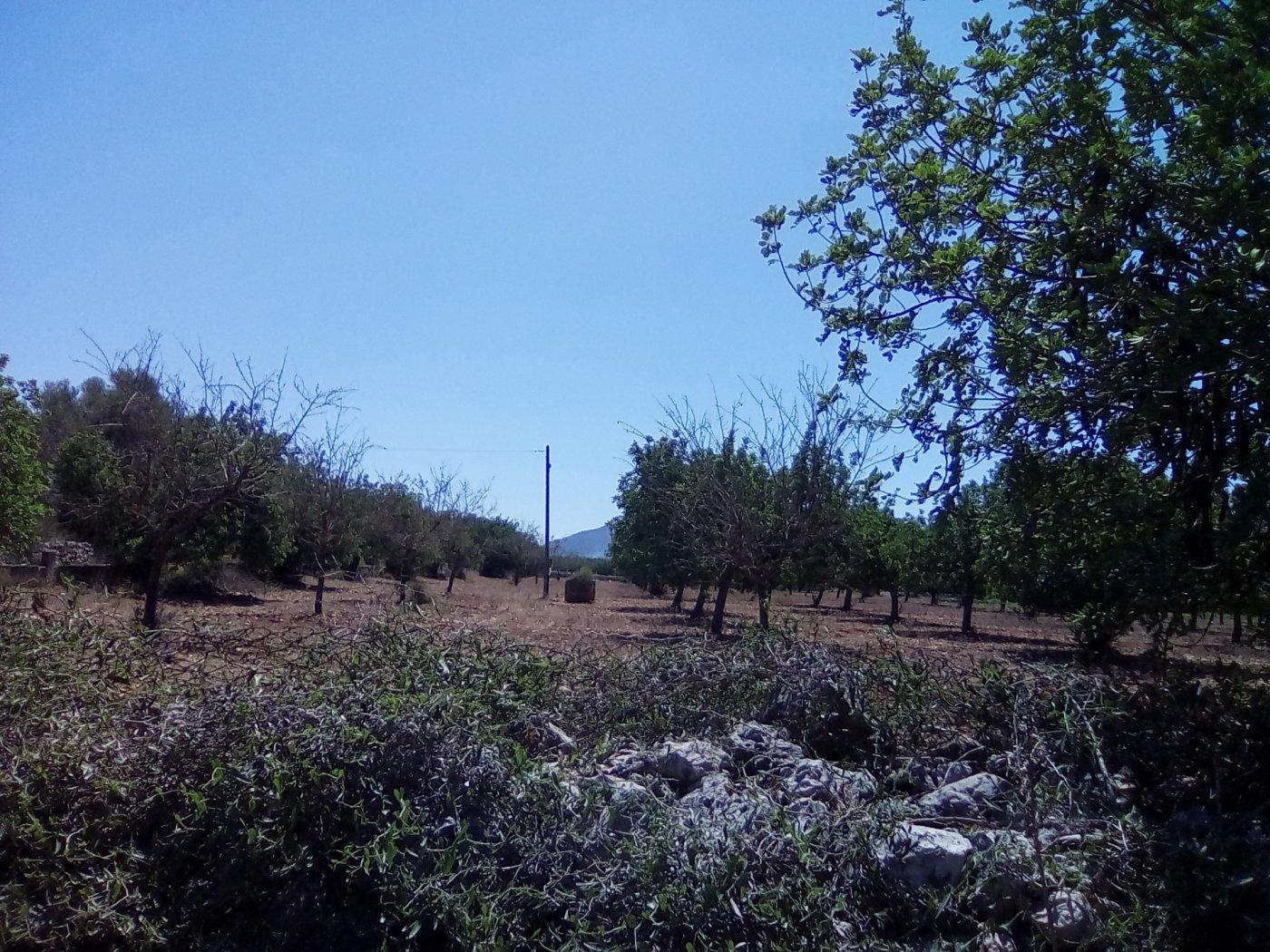Finca rustica en venta con casa de campo en son valls felanitx - imagenInmueble8
