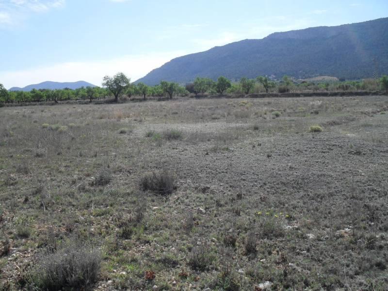 Terrenos rurales - 1113-2