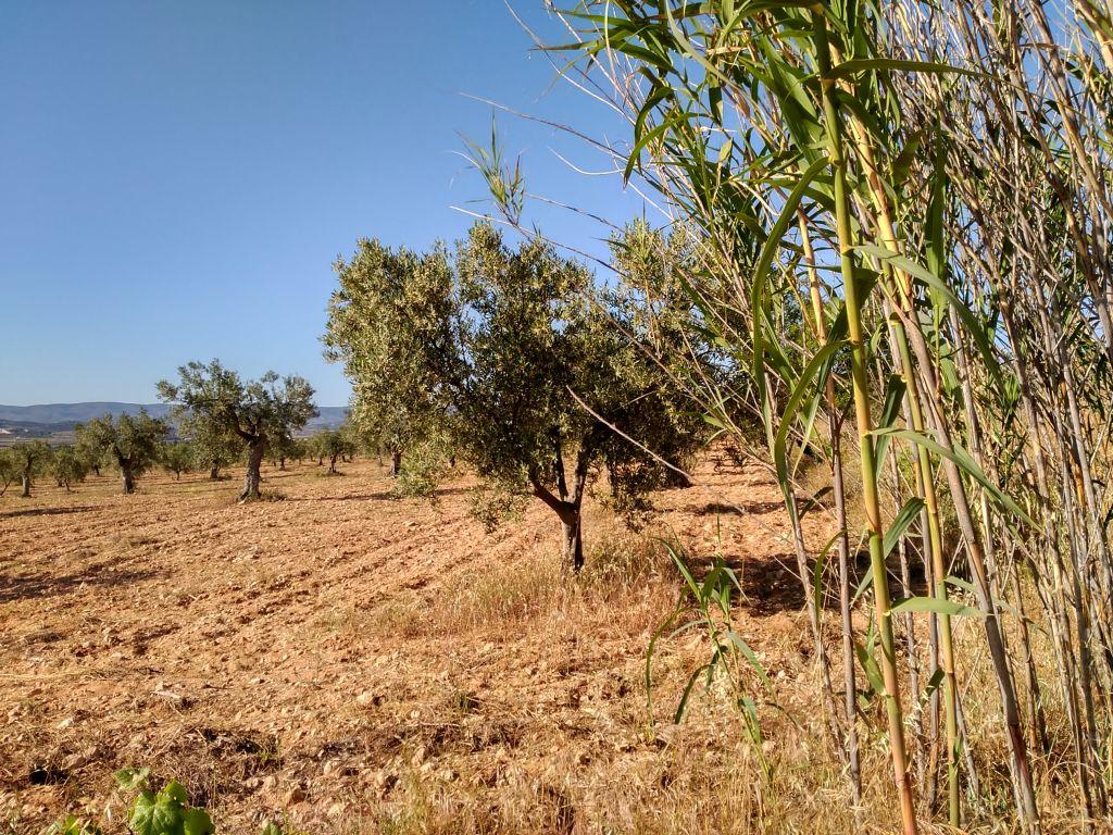 Terrenos rurales - 00364
