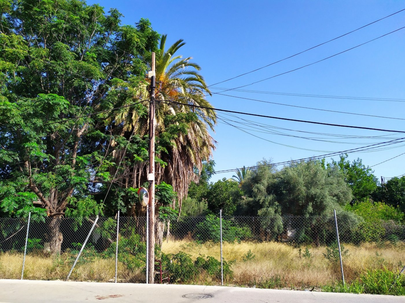 Gran terreno urbanizable en la arboleja - imagenInmueble4